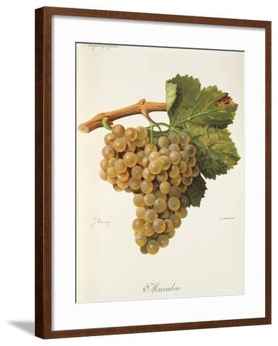 Maccabeo Grape-J. Troncy-Framed Art Print