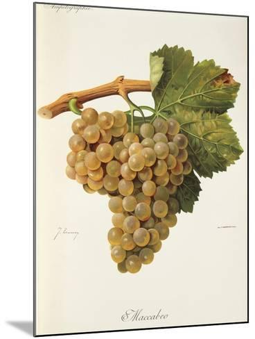 Maccabeo Grape-J. Troncy-Mounted Giclee Print