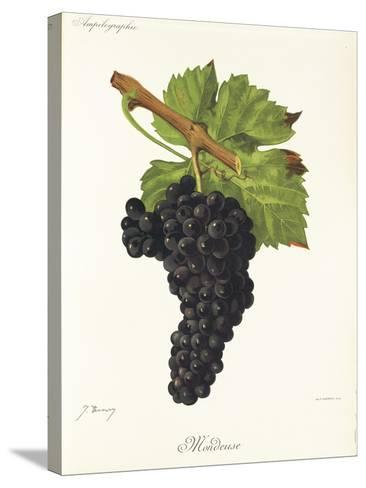 Mondeuse Grape-J. Troncy-Stretched Canvas Print
