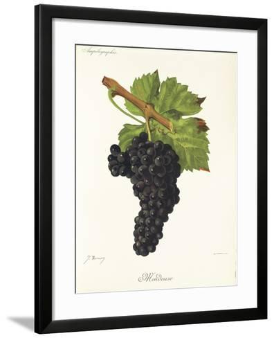 Mondeuse Grape-J. Troncy-Framed Art Print