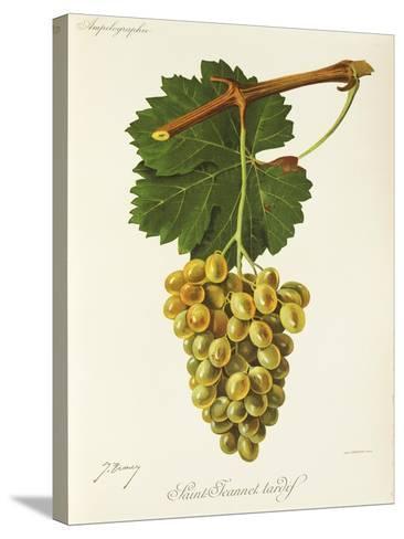 Saint-Jeannet Tardif Grape-J. Troncy-Stretched Canvas Print