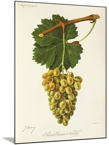 Saint-Jeannet Tardif Grape-J. Troncy-Mounted Giclee Print