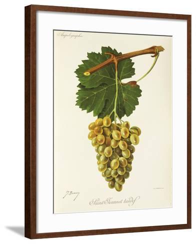Saint-Jeannet Tardif Grape-J. Troncy-Framed Art Print