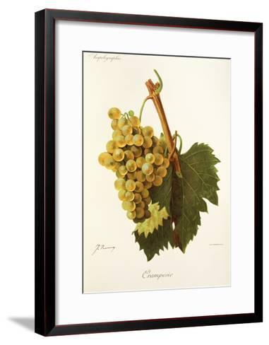 Cramposie Grape-J. Troncy-Framed Art Print