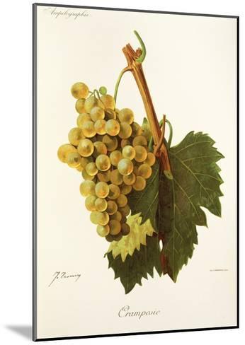 Cramposie Grape-J. Troncy-Mounted Giclee Print
