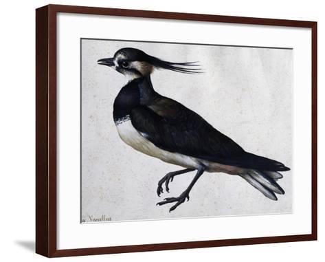 Tringa Vanellus (Lapwing)-Jacopo Ligozzi-Framed Art Print