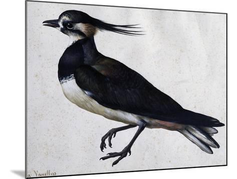 Tringa Vanellus (Lapwing)-Jacopo Ligozzi-Mounted Giclee Print