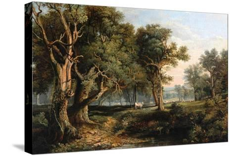 Woodland Scene-James Stark-Stretched Canvas Print