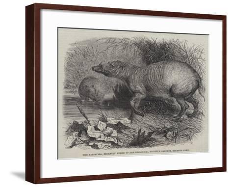 The Babirussa, Recently Added to the Zoological Society's Gardens, Regent's Park-Johann Baptist Zwecker-Framed Art Print