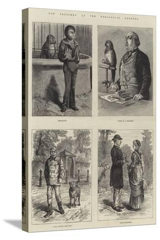 Odd Sketches at the Zoological Gardens-Johann Nepomuk Schonberg-Stretched Canvas Print