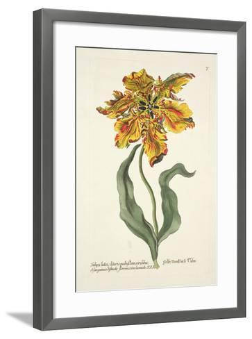 Tulipa Lutea from 'Phythanthoza Iconographica', Published in Germany, 1737-45-Johann Wilhelm Weinman-Framed Art Print
