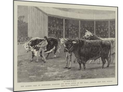 The Queen's Sale of Shorthorn, Hereford and Devon Cattle at the Prince Consort's Shaw Farm, Windsor-John Charles Dollman-Mounted Giclee Print