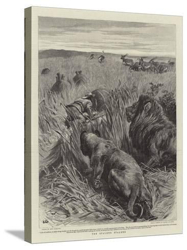 The Stalker Stalked-John Charlton-Stretched Canvas Print