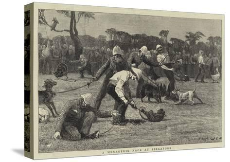A Menagerie Race at Singapore-John Charles Dollman-Stretched Canvas Print