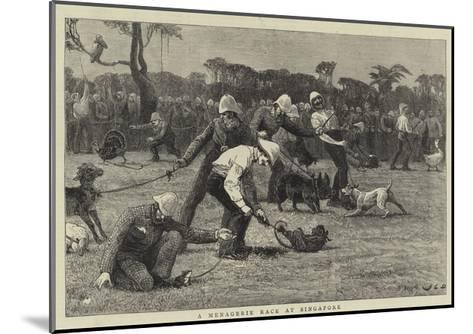 A Menagerie Race at Singapore-John Charles Dollman-Mounted Giclee Print