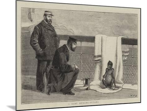 A Baby Ourang-Outang-John Charles Dollman-Mounted Giclee Print