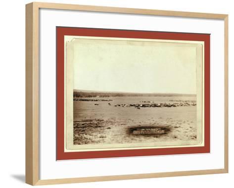 Cattle Round Up-John C. H. Grabill-Framed Art Print