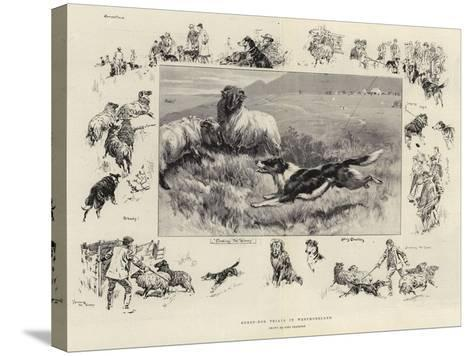 Sheep-Dog Trials in Westmoreland-John Charlton-Stretched Canvas Print