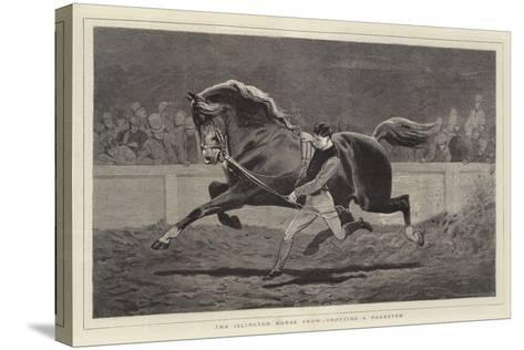 The Islington Horse Show, Trotting a Roadster-John Charlton-Stretched Canvas Print