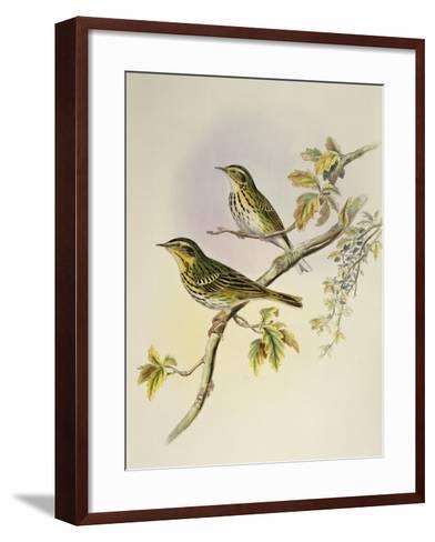 Indian Tree-Pipit (Pipastes Agilis)-John Gould-Framed Art Print