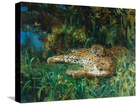 Indian Leopards-John Macallan Swan-Stretched Canvas Print
