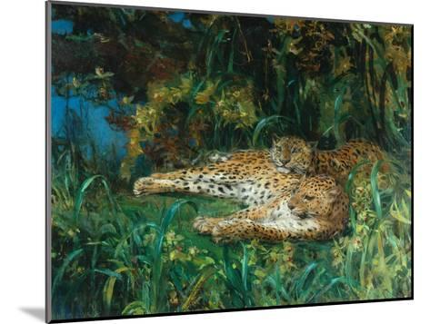 Indian Leopards-John Macallan Swan-Mounted Giclee Print