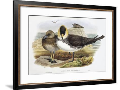 Pomarine Jaeger (Stercorarius Pomarinus)-John Gould-Framed Art Print