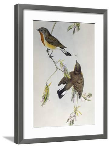 Red-Breasted Flycatcher (Ficedula Parva)-John Gould-Framed Art Print