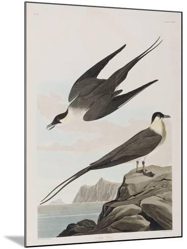 Illustration from 'Birds of America', 1827-38 (Hand-Coloured and Aquatint)-John James Audubon-Mounted Giclee Print