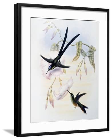 Scissor-Tailed Hummingbird (Hylonympha Macrocerca)-John Gould-Framed Art Print