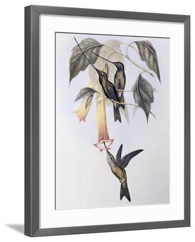 Sword-Billed Humming Bird (Docimastes Ensiferus)-John Gould-Framed Art Print