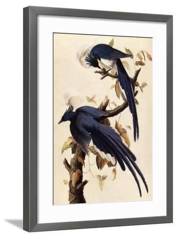 Magpie Jay, 1829-John James Audubon-Framed Art Print