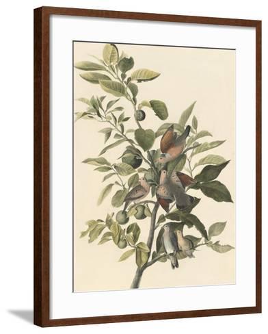 Common Ground Dove-John James Audubon-Framed Art Print
