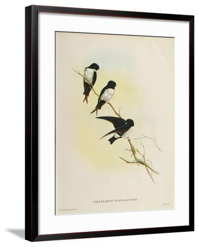 Delichon Nipalensis, from 'A Century of Birds from the Himalaya Mountains', 1830-32-John Gould-Framed Art Print