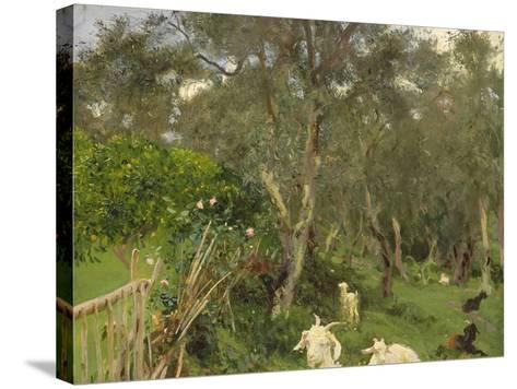 Olives in Corfu, 1909-John Singer Sargent-Stretched Canvas Print