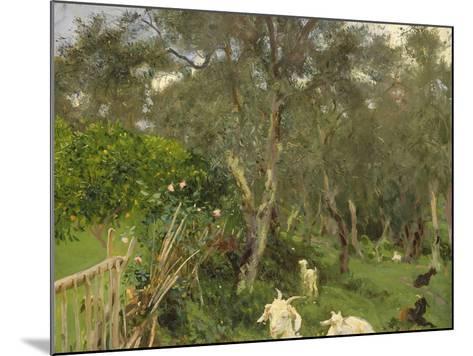 Olives in Corfu, 1909-John Singer Sargent-Mounted Giclee Print