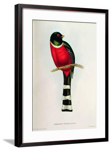 Trogon Mexicanus-John Gould-Framed Art Print