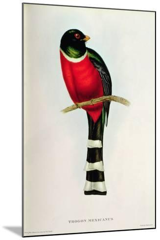 Trogon Mexicanus-John Gould-Mounted Giclee Print