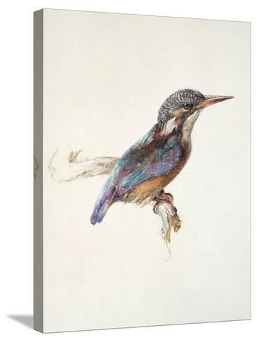 Study of a Kingfisher, with Dominant Reference to Colour, Probably October 1871-John Ruskin-Stretched Canvas Print