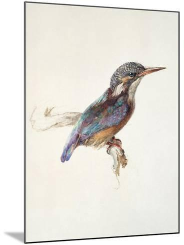 Study of a Kingfisher, with Dominant Reference to Colour, Probably October 1871-John Ruskin-Mounted Giclee Print