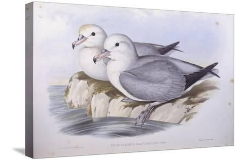 Southern Fulmar (Fulmarus Glacialoides)-John Gould-Stretched Canvas Print