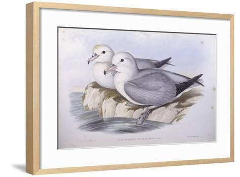 Southern Fulmar (Fulmarus Glacialoides)-John Gould-Framed Art Print