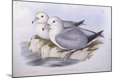 Southern Fulmar (Fulmarus Glacialoides)-John Gould-Mounted Giclee Print