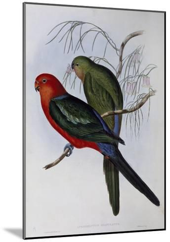 Australian King Parrot (Alisterus Scapularis) (1804-1881) and Henry Constantine Richter (1821-1902)-John Gould-Mounted Giclee Print