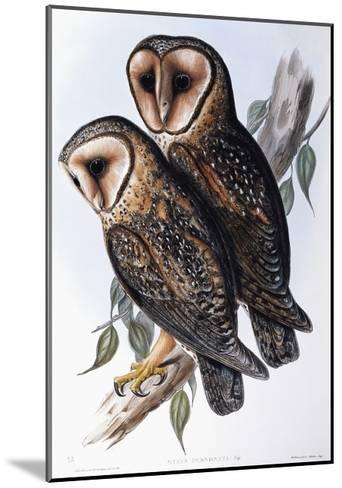 Australian Masked-Owl (Strix Personata)-John Gould-Mounted Giclee Print
