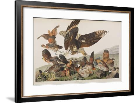 Illustration from 'Birds of America', 1827-38 (Hand-Coloured and Aquatint)-John James Audubon-Framed Art Print