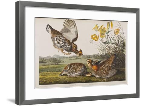 Illustration from 'Birds of America', 1827-38 (Hand-Coloured and Aquatint)-John James Audubon-Framed Art Print