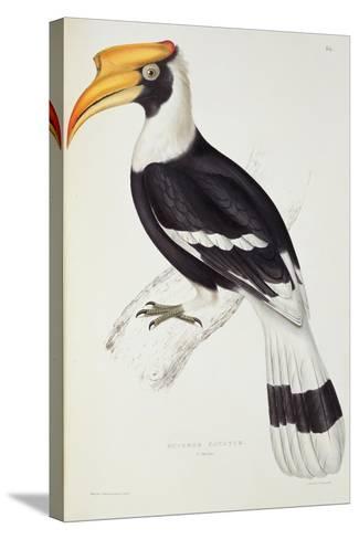 Buceros Cavatus-John Gould-Stretched Canvas Print