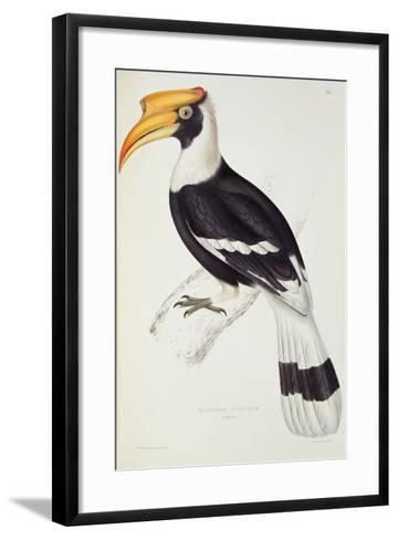 Buceros Cavatus-John Gould-Framed Art Print