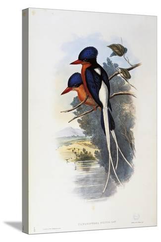 Buff-Breasted Paradise-Kingfisher (Tanysiptera Sylvia)-John Gould-Stretched Canvas Print